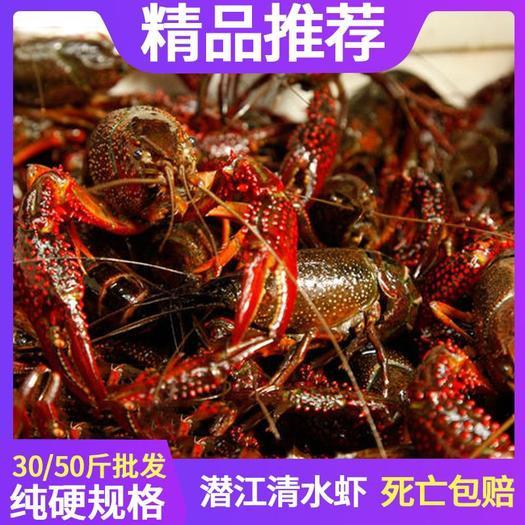 精品小龙虾湖北潜江市小龙虾清水虾小红中红大青鲜活包邮干净