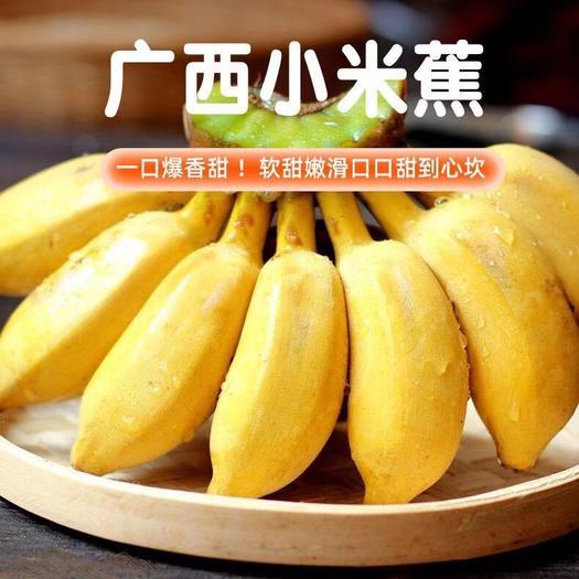广西小米蕉新鲜香蕉当季水果小芭蕉苹果蕉粉蕉现摘现发孕妇水果