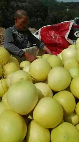 平和蜜柚 2斤以上