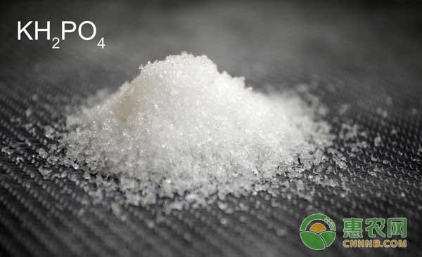 如何识别磷酸二氢钾的真假?磷酸二氢钾有啥妙用?