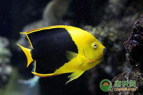 鱼类养殖:水体浑浊怎么办