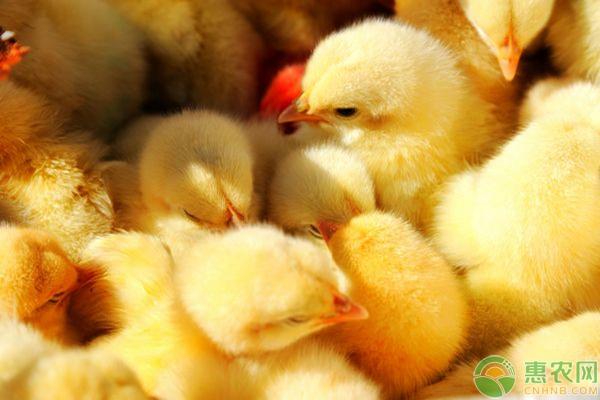 *鸡养殖常见病