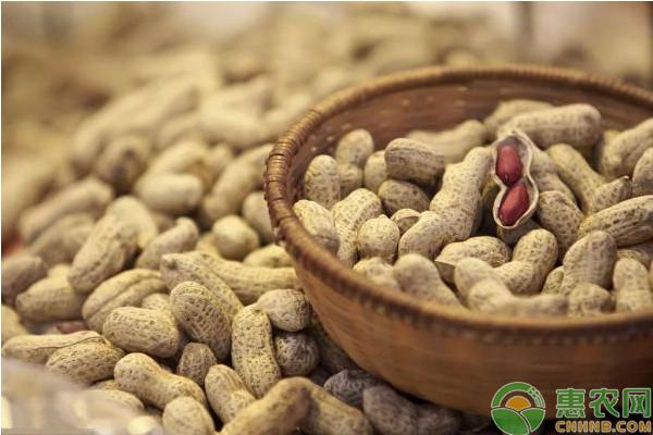 小麦—金银花—花生粮药间作高效栽培技术
