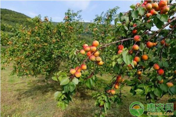 浅谈果树种植病虫害防治存在的问题