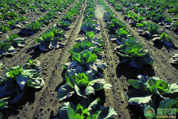 农作物农药药害