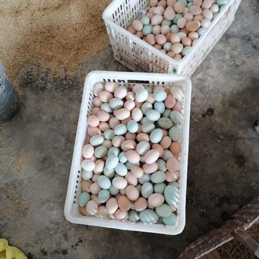 初生蛋粉绿混装开窝蛋小鸡蛋林地生态散养土鸡蛋420枚装