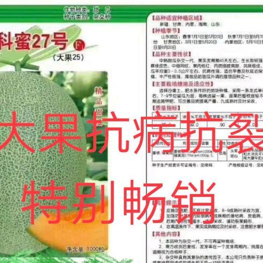 晓蜜25创科蜜27(大果二十五号)哈蜜瓜种子抗病强抗裂