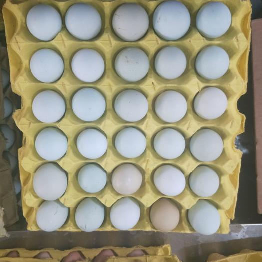 新杨绿壳蛋,大号,翡翠绿,蛋黄大,蛋清粘稠,口感香醇