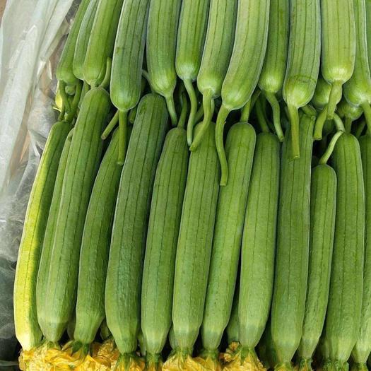 鲜花丝瓜  精品大棚丝瓜,大量有货,量大从优