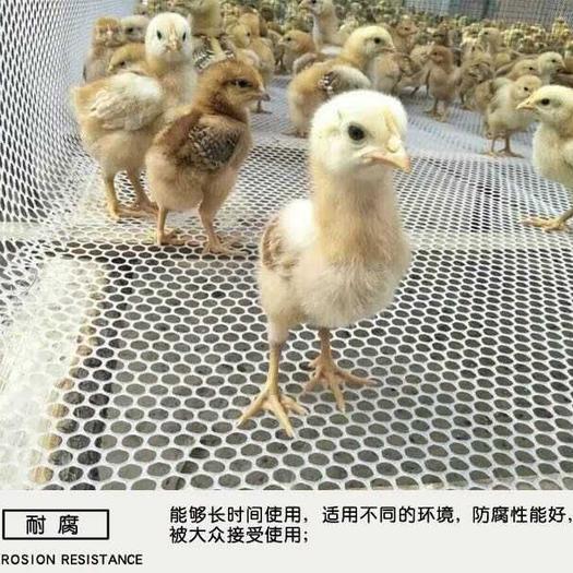 漏粪板  全新纯料塑料养殖网 育雏网 鸡鸭鹅漏粪网防护网苗床网脚踏网
