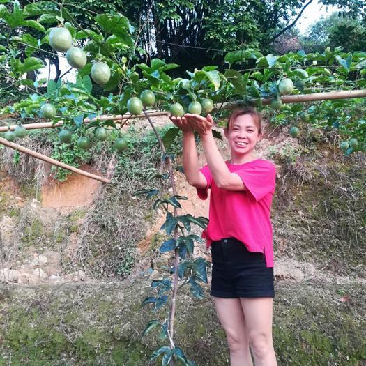 满天星百香果苗  当年种当年结果 易管理 收益快适合地栽盘栽