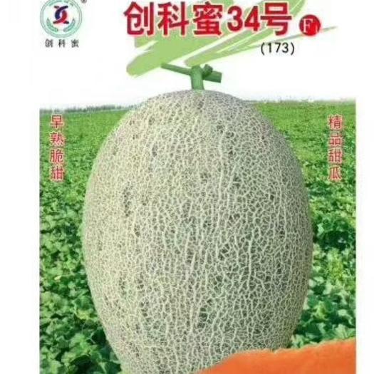 青花蜜种子 创科密34号~早熟大果抗病抗裂性强产量高网纹好品质高18度