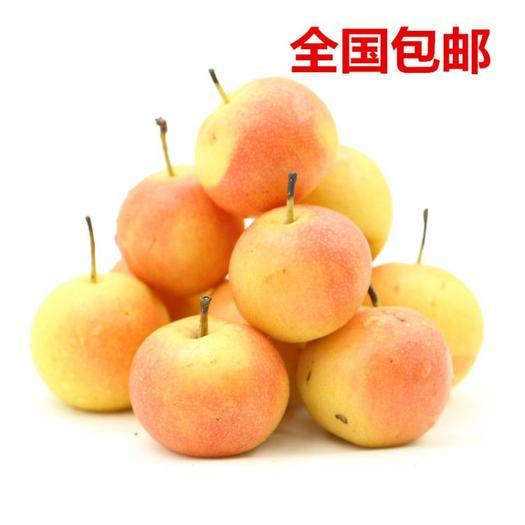 鞍山南果梨東北特產香水梨新鮮水果