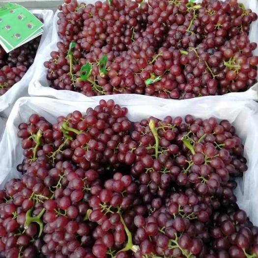 红宝石葡萄大量上市,串型好,颜色深,口感二十多个糖。