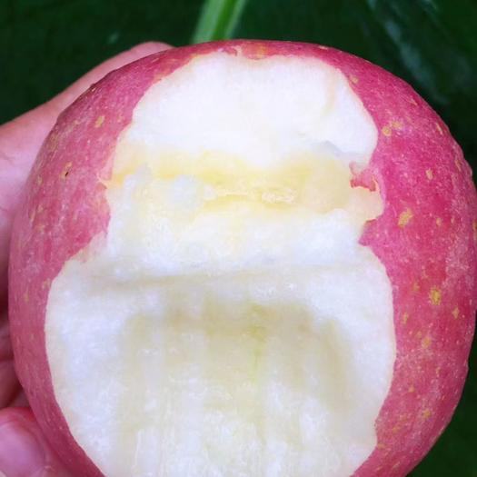 丑蘋果  甘肅特產平涼金果涇川純天紅富士蘋果基地直供
