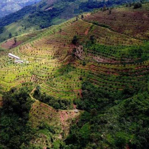 老挝高东泽农产品进岀口有限公司出售咖啡豆