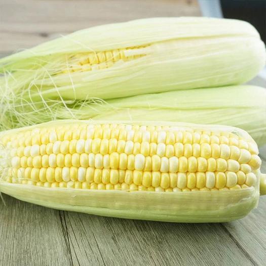 全年供货云南水果玉米现摘现发  专业一件代发5斤9斤装