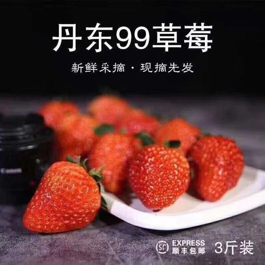 紅顏草莓  全國發貨丹東東港特產99牛奶草莓支持一件代發歡迎微商 電商