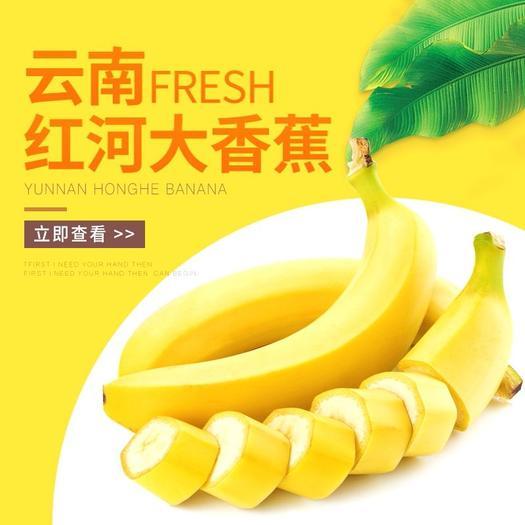 云南香蕉10斤装包邮价净重9斤产地直发坏果包赔