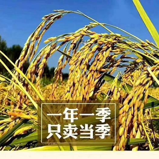 粳稻谷  五常稻花香2号稻谷【鲜米机专用】稻花香发源地龙凤山乐园村直