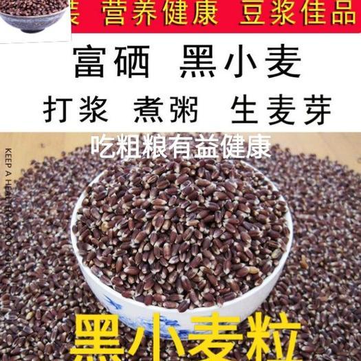 黑小麦逢黑必补好粗粮有益健康健康5斤一袋包邮