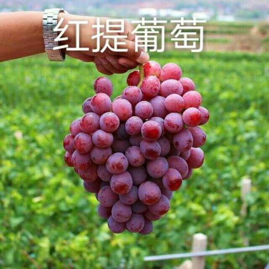 陕西省.大荔县和蒲城县两个县红提葡萄正在热卖中(代存、代办