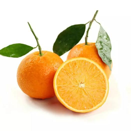 伦晚脐橙  湖北秭归伦晚橙5斤商品果大果包邮现摘现发(可发湖北)