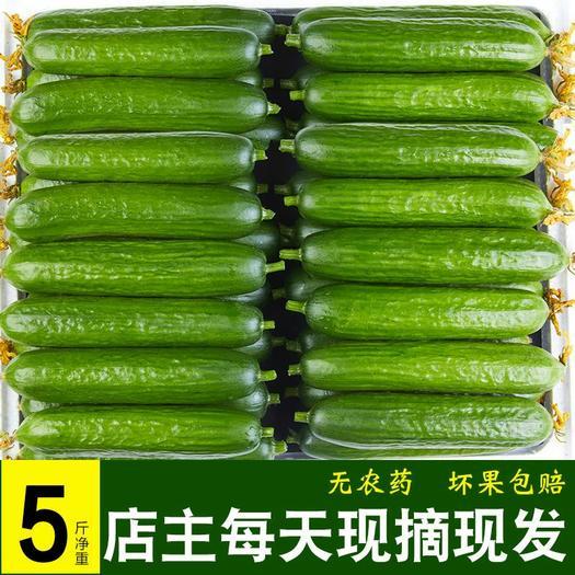 水果黄瓜  【现摘现发】水果小黄瓜新鲜无刺荷兰青瓜生吃孕妇5斤3斤蔬菜