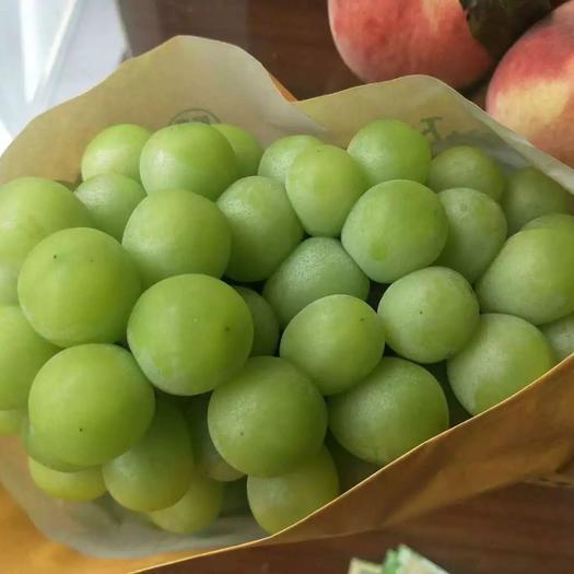 阳光玫瑰  云南青提日本青印3斤5斤包邮一件代发无籽葡萄电商供应