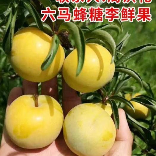贵州,蜂糖李子果5斤新鲜水果脱骨李孕妇蜂蜜冰糖脆李镇宁特产
