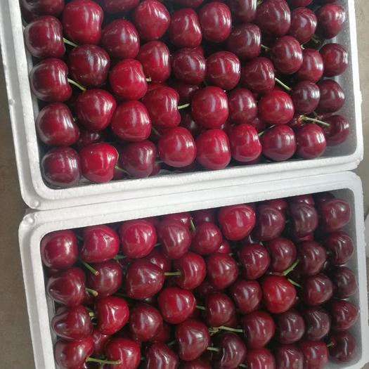 大樱桃  万亩露天樱桃已大量上市了,产地直供,大量现货