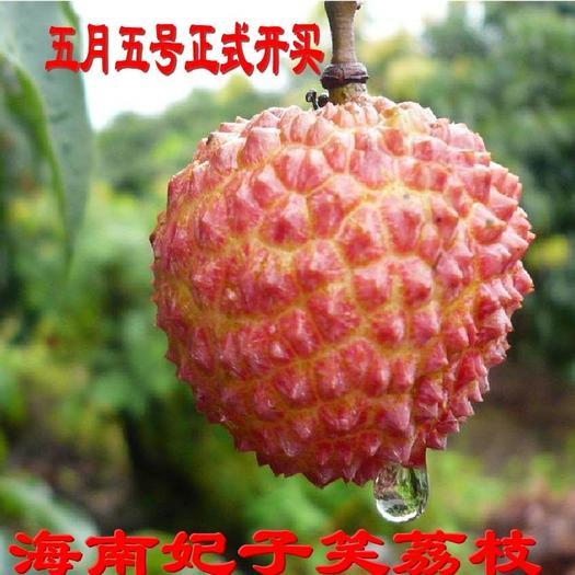 海南妃子笑荔枝5斤装现摘现发整箱当季新鲜水果顺丰包邮