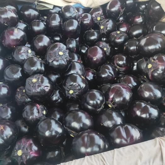 黑圆茄 我处大量圆茄上市,有需要的老板直接联系。