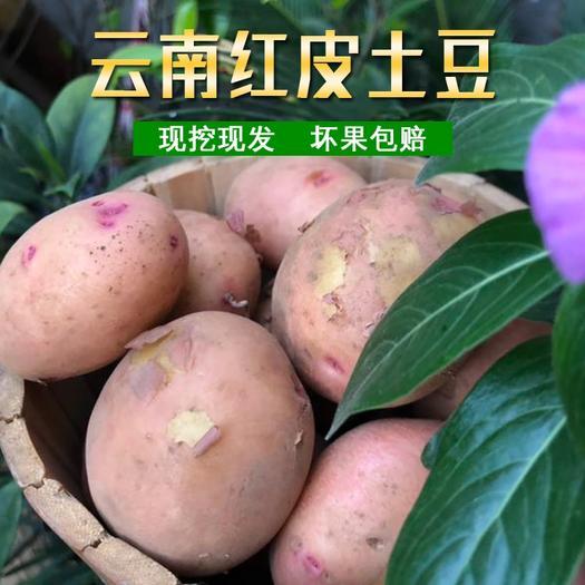 黄心土豆  现挖新鲜土豆红皮黄心云南山地马铃薯5斤9斤装