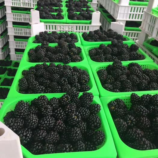 水果界的黑马--精品黑莓,抗氧化,抗疲劳……