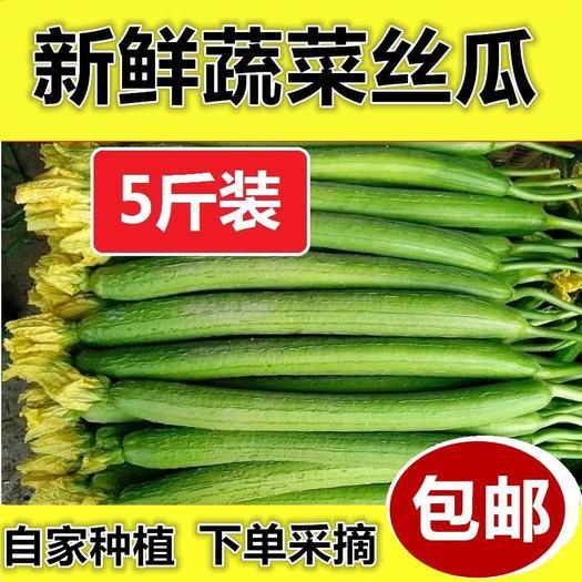 正常发货】丝瓜新鲜蔬菜绿皮丝瓜农家自种现摘现发丝瓜孕妇绿丝瓜