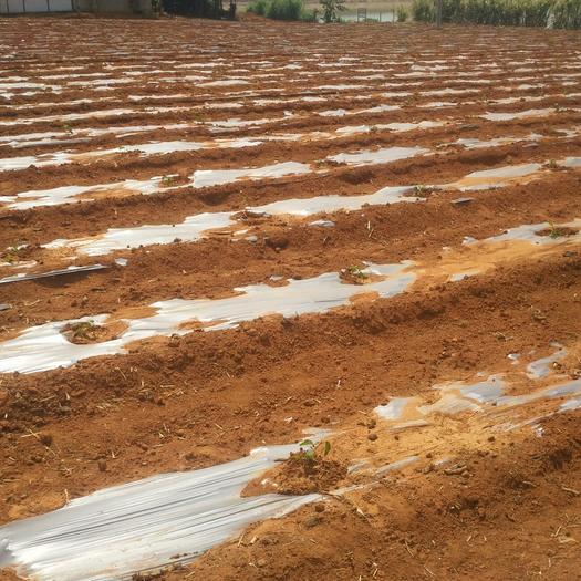 旱地 出租 5~10年 500~1000亩