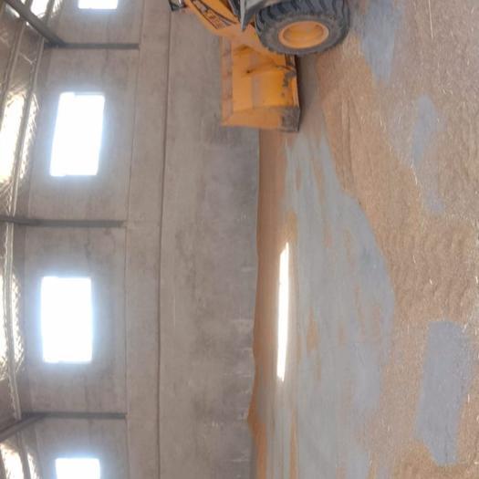 混合小麦  出售2020年小麦130万斤