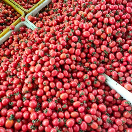 樱桃小番茄 大量供应樱桃小西红柿