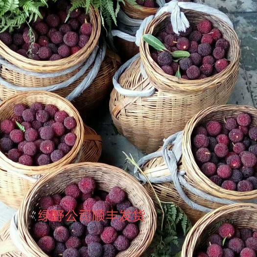 靖州原生態楊梅新鮮烏梅荸薺梅純天然食品一件代發順豐包郵
