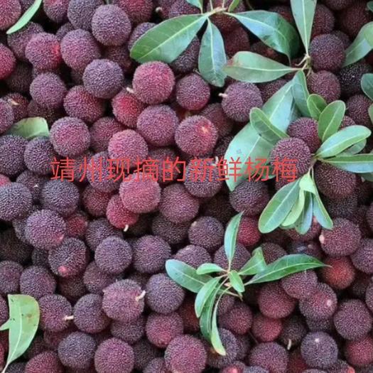 楊梅  純天然新鮮烏梅基地直銷代辦0.2元一斤批發零售