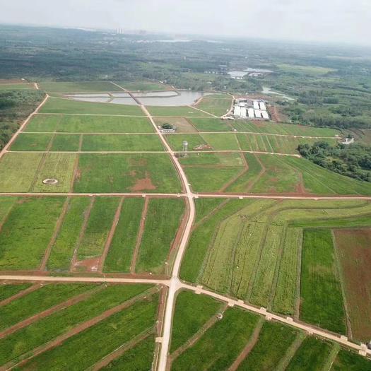 旱地  交通便利,水電到位,土地肥沃