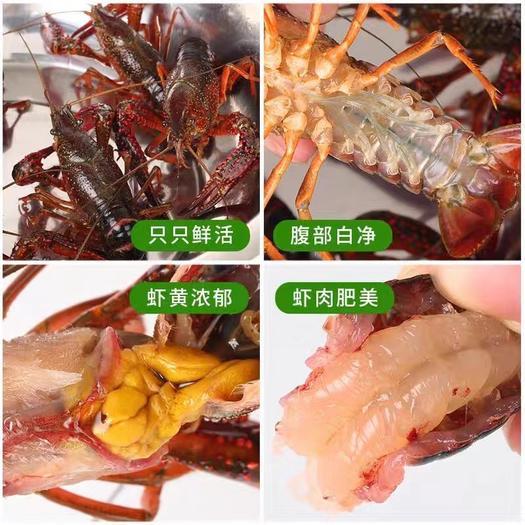 湖北潜江市小龙虾,合作社直供,只有硬货精品,一分钱一分货。