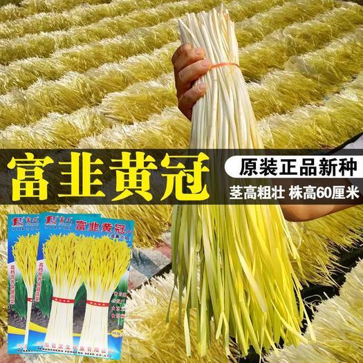 富韭黄冠韭黄种子韭菜籽四季农家宽叶大叶窄叶韭黄菜种籽耐热耐寒