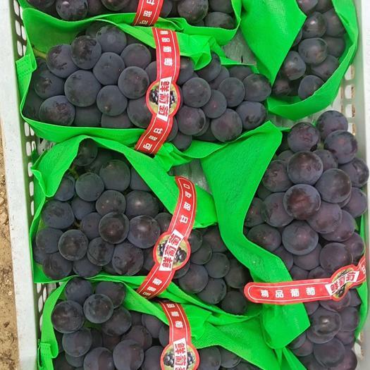 巨峰葡萄  巨丰葡萄大量上市,质量好,价格低,货源充足,有需要的联系