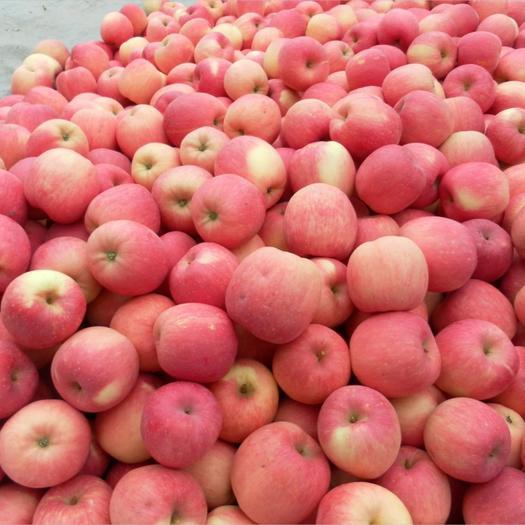 红富士苹果 红将军苹果 果面干净口感甜 全国各地代发