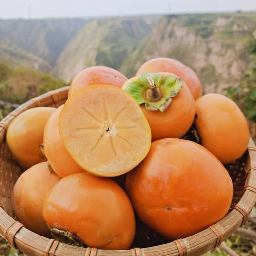 甜脆柿  坏果包赔 陕西脆甜柿子大果   产地直供   一件代发