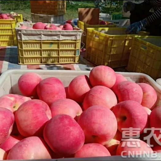 红富士苹果  SF顺丰发货[洛川扶贫项目]现摘现发洛川苹果脆甜口感红富士
