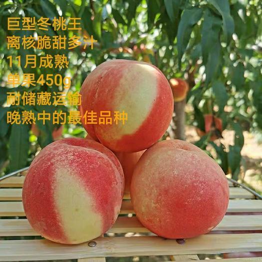 冬桃苗  巨型冬桃,中华2号冬桃,脆甜,畅销品种,桃树首选品种