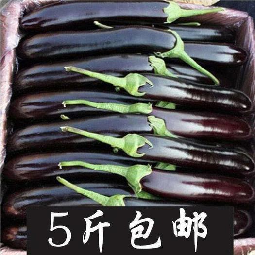 黑长茄  山东寿光精选长茄现摘现发农家自种保证新鲜。